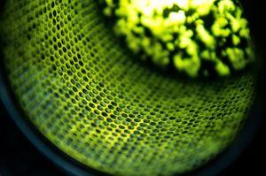 黃櫳賢石雕茶器